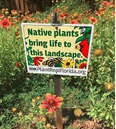 Native plants bring life to this landscape.